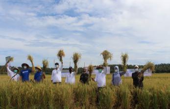 Intani-Tanihub Panen Raya Korporasi Petani Ujung Genteng