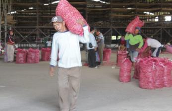 Kalimantan Barat Defisit 840 Ton Bawang Merah