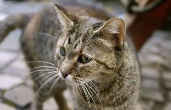 Chicago Lepas Ribuan Kucing untuk Tekan Hama Tikus