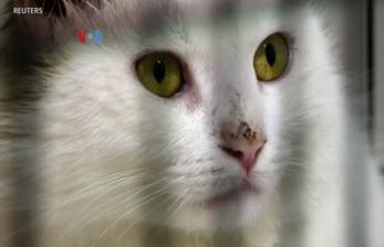 Bisakah Kucing Tularkan Covid-19?