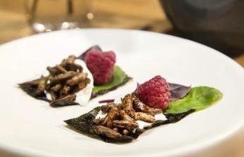Serangga Dipertimbangkan Jadi Bahan Makanan di Masa Depan