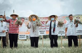 Mentan Panen Raya Bawang Merah di Bima Pastikan Stok Cukup