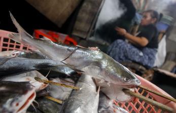 In Picture: Harga Ikan Asap Naik Akibat Pasokan Menurun