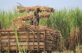 Kementerian BUMN: Holding Pabrik Gula Ciptakan Efisiensi