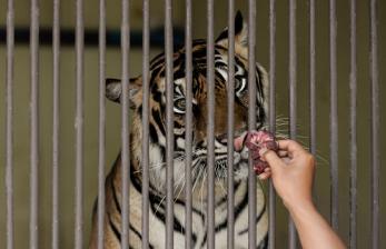 Wiku: Tak Ada Bukti Hewan Tularkan Covid ke Manusia