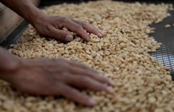 Ekspor Kopi Indonesia Masih Tertinggal dari Vietnam