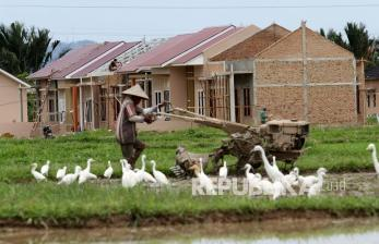 Lahan sawah di Padang menyusut 1.002 hektare