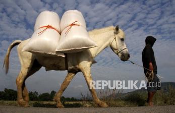 In Picture: Petani Gowa Manfaat Kuda Angkut Hasil Panen