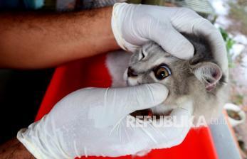 Pemprov DKI Gandeng Daerah Penyangga Cegah Penularan Rabies