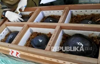 13 Kura-Kura Rote Dipulangkan dari Singapura ke NTT