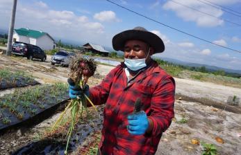 Kementan Siapkan Jalur Pemasaran Panen Food Estate di Sumut