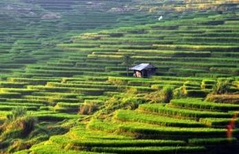 Perubahan Iklim Buat Petani Vietnam Banting Setir