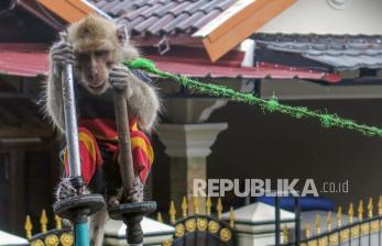 Monyet Lepas di Palmerah Gigit Kepala Bocah 4 Tahun