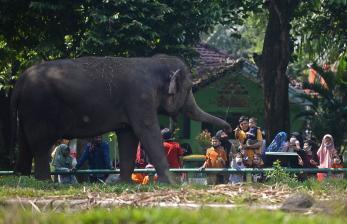 Waktu dan Pengunjung Taman Margasatwa Ragunan Dibatasi