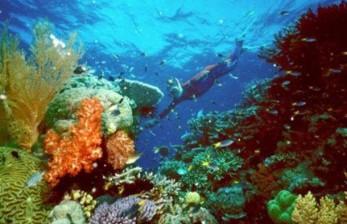PBB Usulkan Great Barrier Reef Masuk Daftar 'Dalam Bahaya'