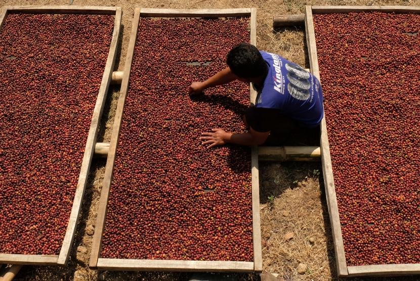 Pekerja menjemur bijih kopi Arabika petik merah di Kwadungan, Kledung, Temanggung, Jawa Tengah, Senin (12/8/2019).