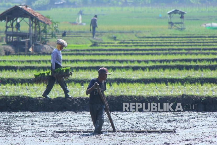 Sejumlah petani sedang menyiapkan lahan di sawahnya untuk ditanami padi. (Ilustrasi)