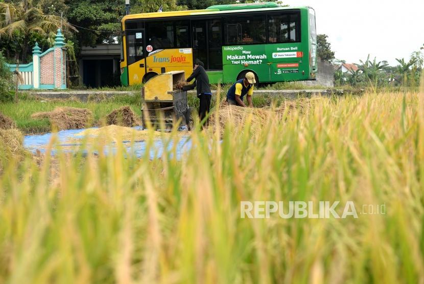Penyusuran Sawah Perkotaan. Petani memanen padi di persawaan tepi Kota Yogyakarta, Jumat (19/7/2019).