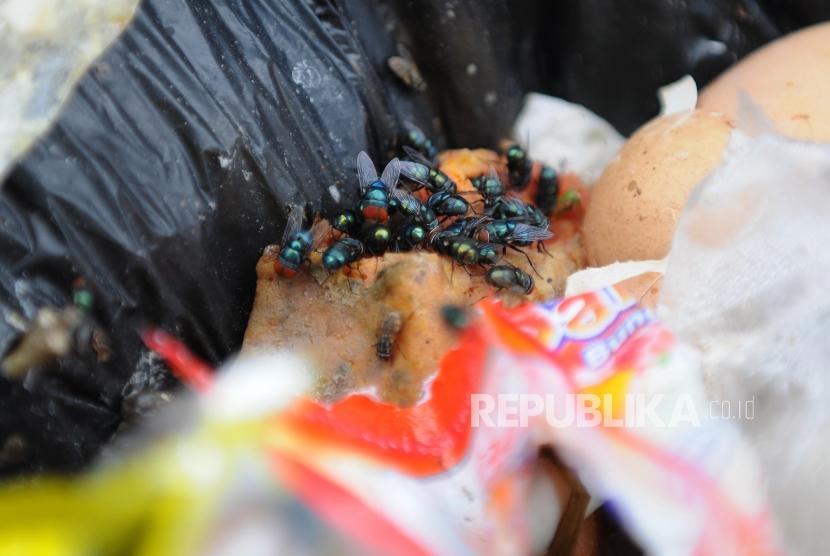 Cara mudah mengusir lalat dan mengurangi bau di tempat sampah (ilustrasi).