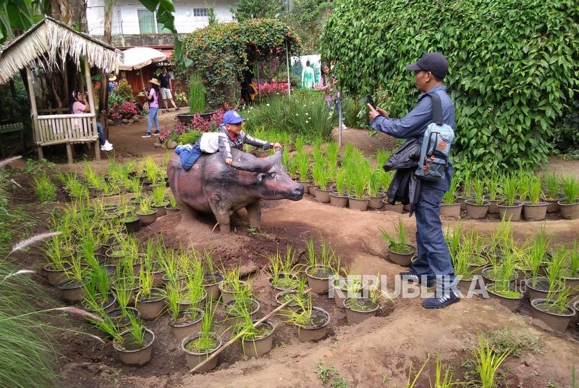 Aktivitas pengunjung di tempat wisata Taman Bunga Begonia, Jalan Maribaya, Kecamatan Lembang, Kabupaten Bandung Barat, Jumat (7/6).