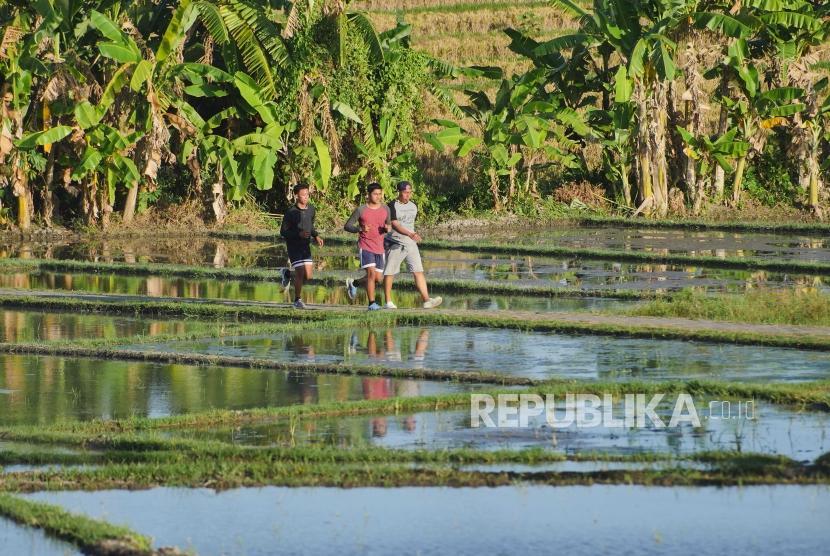 Warga Denpasar lari joging di pematang sawah kawasan terbuka hijau Subak Sembung Denpasar Bali.