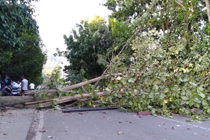 Pohon tumbang menutupi jalan pascakerusuhan di Manokwari, Papua Barat, Senin (19/02/2019).
