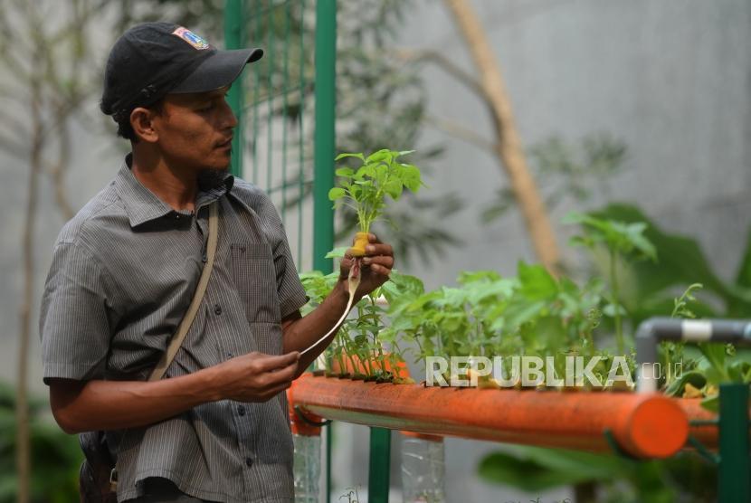 Petugas saat melakukan perawatan tanaman hidroponik dengan menggunakan barang bekas di Balai Kota Jakarta, Selasa (9/4).