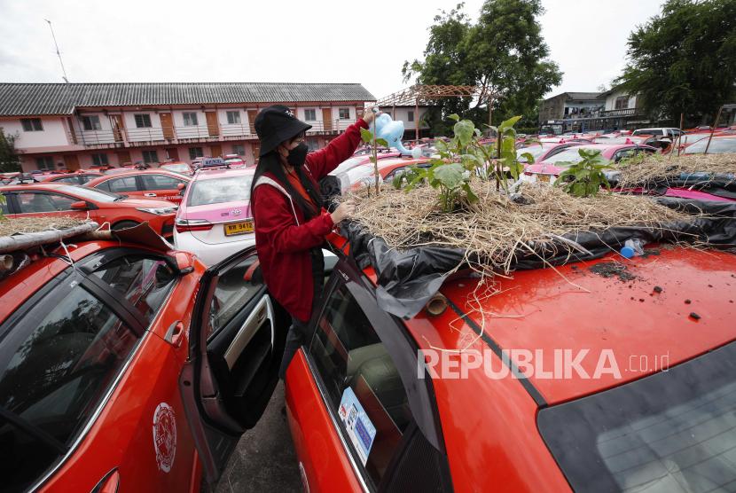 Anggota staf perusahaan taksi Thailand memercikkan air untuk menanam sayuran di mobil taksi bekas yang tidak terpakai yang diparkir di Koperasi Taksi Ratchaphruek di Bangkok, Thailand, 14 September 2021.
