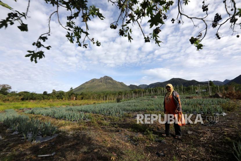 Seorang petani bekerja di ladang bawang merah dan tomat di desa Bale Atu, Bener Meriah, Aceh, Selasa (14/9). Pada Agustus 2021, pemerintah mencatat pendapatan negara sebesar Rp 1.177,61 triliun atau 67,54 persen dari target.