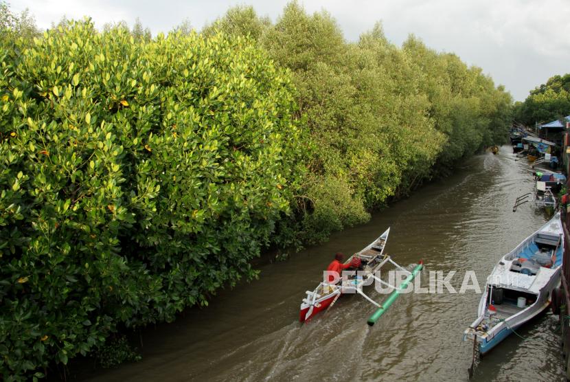 Kawasan mangrove (ilustrasi). Pemerintah terus mendorong rehabilitasi ekosistem mangrove.