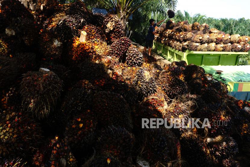 Tandan Buah Segar (TBS) kelapa sawit (ilustrasi).