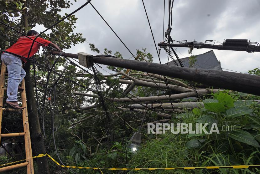 Petugas mengecek jaringan kabel listrik yang tertimpa pohon tumbang setelah diterpa angin kencang dan hujan lebat.