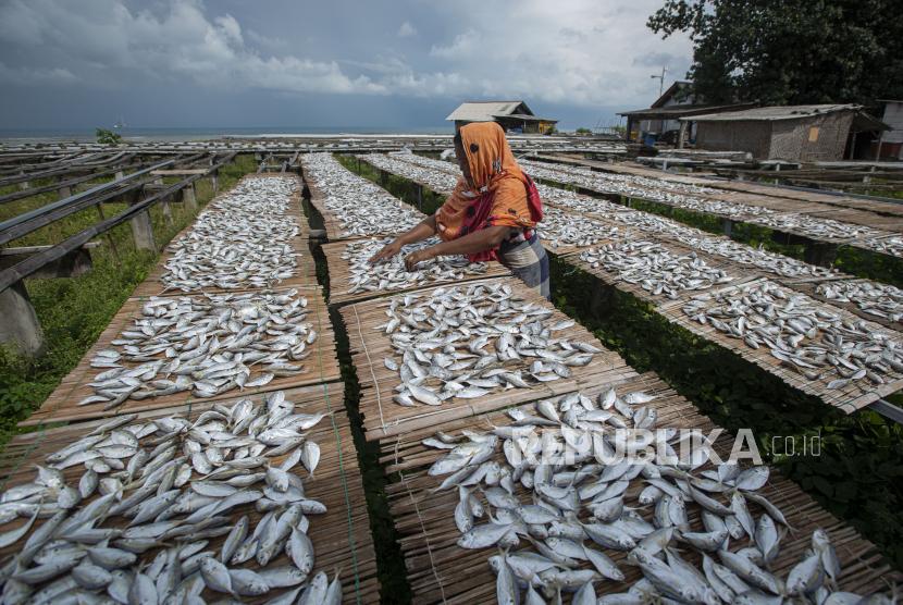 Warga menjemur ikan selar untuk diproses menjadi produk ikan asin di Pulau Sabira, Kabupaten Kepulauan Seribu, DKI Jakarta, Kamis (17/6/2021). Produsen ikan asin setempat mengalami penurunan produksi lebih dari 50 persen sejak April 2021 karena pasokan dari nelayan menurun drastis akibat gelombang laut tinggi yang dipicu angin musim timur.
