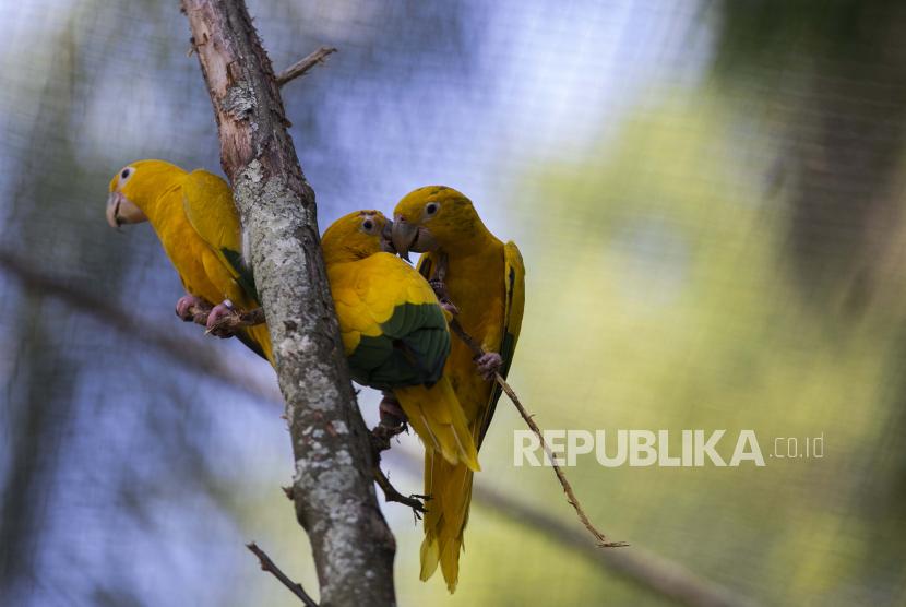 Sejumlah burung bertengger di dalam kandang pada sebuah taman konservasi keanekaragaman hayati (ilustrasi).