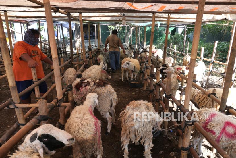 Jelang Idul Adha, DKP3 Sukabumi Gencar Pantau Hewan Qurban (ilustrasi).
