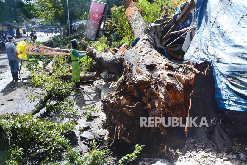 Ilustrasi pohon tumbang di Kota Bandung, Jawa Barat.