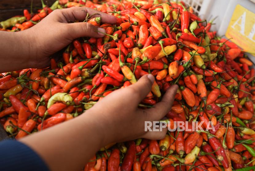 Pedagang menyortir cabai rawit di pasar. ilustrasi