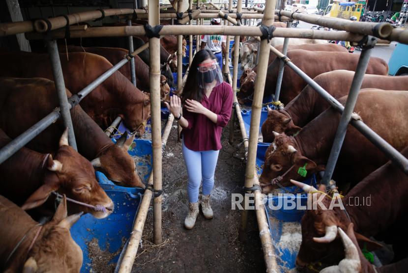 SPG memakai alat pelindung melihat kondisi sapi-sapi yang dijual untuk Qurban di Mall Hewan Qurban, Depok