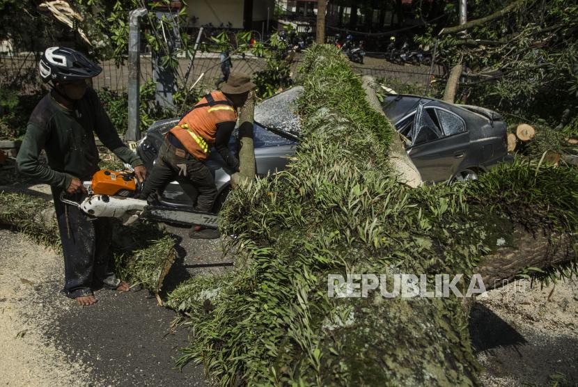 Pohon Tumbang di Bandung Menimpa Mobil & Ruko (ilustrasi).