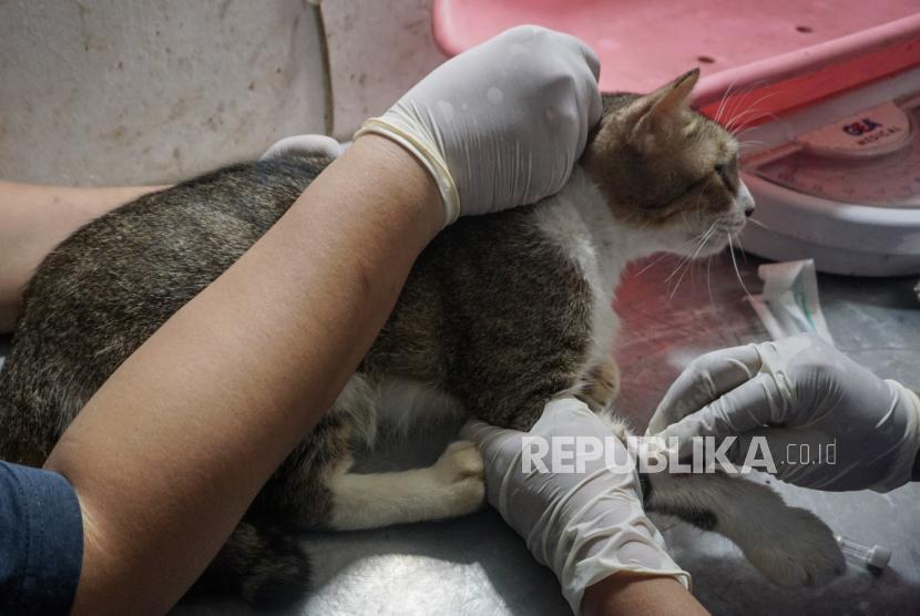 Pengobatan Gratis Dan Donor Darah Kucing Di Solo Republika Online