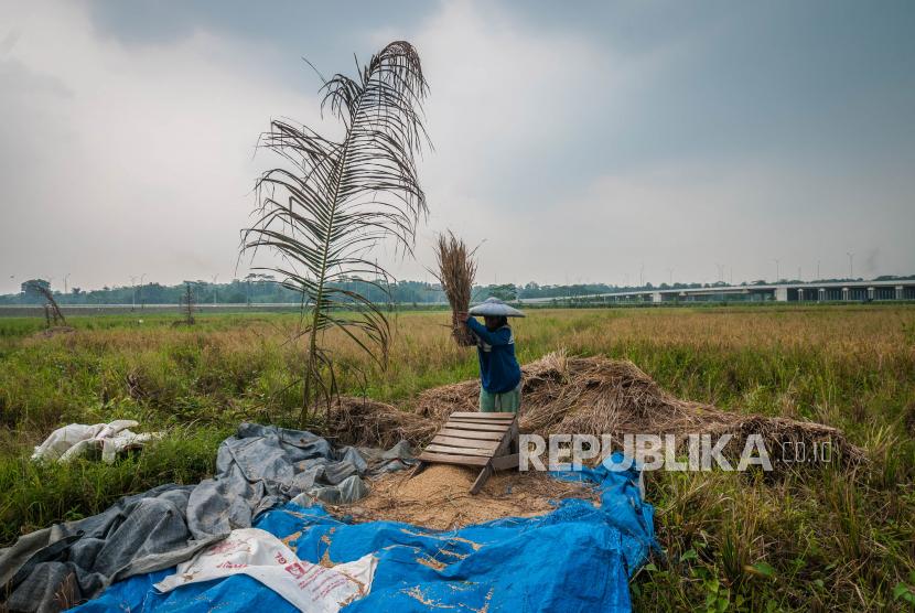 Petani memanen padi di Rangkasbitung, Lebak, Banten, Ahad (5/9/2021). Badan Pusat Statistik mencatat nilai tukar petani (NTP) pada bulan Agustus 2021 sebesar 104,68 atau naik 1,16 persen jika dibandingkan pada bulan sebelumnya, kenaikan tersebut dipengaruhi oleh peningkatan NTP di subsektor tanaman pangan, tanaman perkebunan rakyat, serta nilai tukar subsektor perikanan yaitu nelayan dan pembudidaya ikan.
