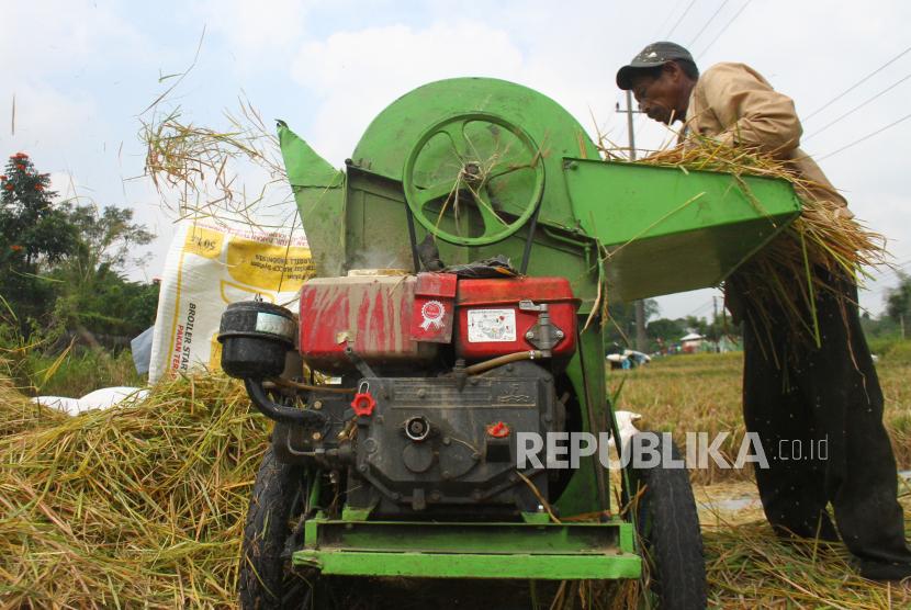 Petani memanen padi di sebuah area persawahan di Blimbing, Malang, Jawa Timur