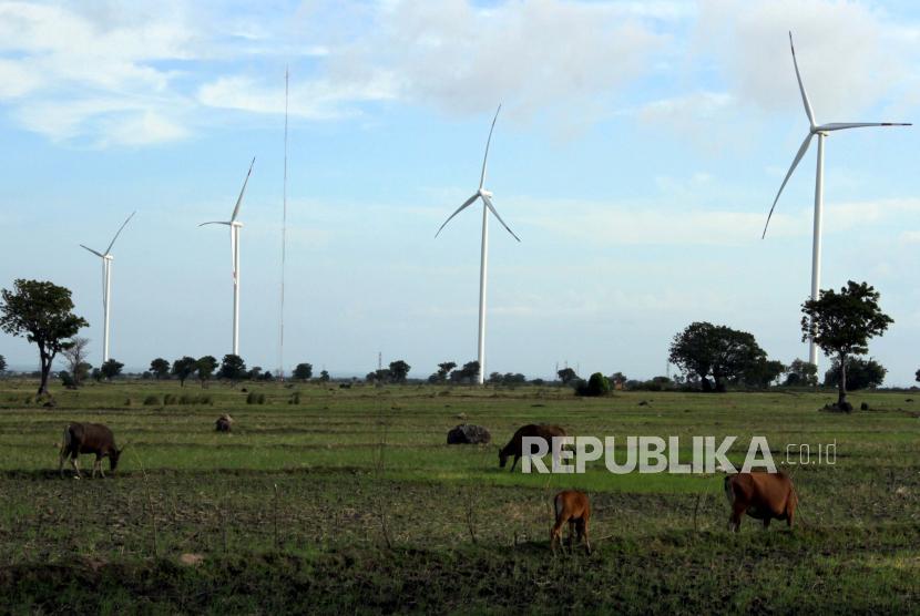 Hewan ternak milik warga mencari makan di area Pembangkit Listrik Tenaga Bayu (PLTB) Tolo di Kabupaten Jeneponto, Sulawesi Selatan, Kamis (9/7/2020). Kementerian ESDM mencatat bauran energi baru dan terbarukan (EBT) telah mencapai 15 persen dari target sebesar 23 persen pada 2025. ANTARA FOTO/Arnas Padda/yu/aww.