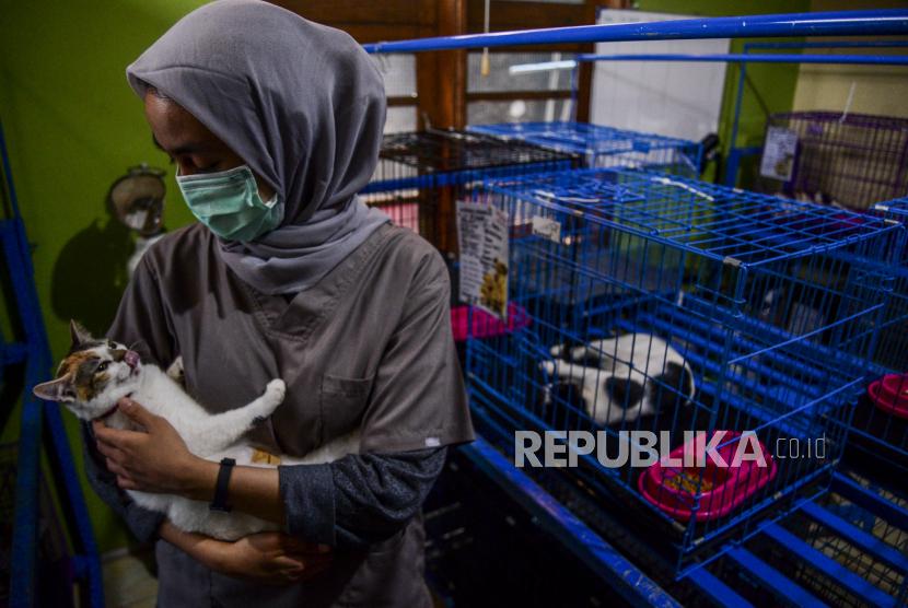 Petugas memeriksa kondisi kucing peliharaan yang dititipkan di Amore Animal Clinic, Pasar Minggu, Jakarta, Selasa (11/5). Menurut dokter hewan di klinik tersebut, pada masa larangan mudik lebaran ini jasa penitipan hewan peliharaan miliknya mengalami penurunan drastis. Sebelum adanya larangan mudik akibat pandemi COVID-19, saat mendekati lebaran klinik tersebut bisa menampung hingga 300 ekor hewan peliharaan, namun kini hanya menampung 10 ekor.
