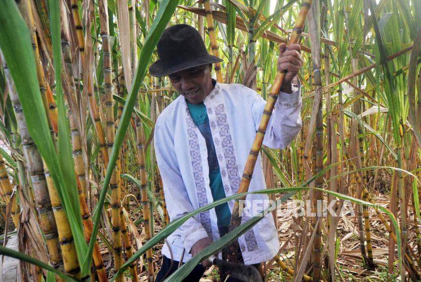 Petani memanen tebu untuk diolah menjadi gula (ilustrasi). Dewan Pimpinan Nasional Asosiasi Petani Tebu Rakyat Indonesia (APTRI) secara tegas menolak rencana pemerintah mengenakan pajak pertambahan nilai (PPN) pada bahan pokok (sembako)ANTARA FOTO/Iggoy el Fitra/hp.