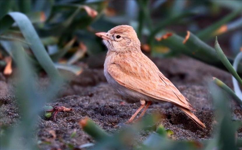 Area lahan basah akan menampung banyak spesies burung jika tidak terganggu manusia.