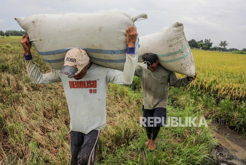 Petani membawa karung beras saat panen raya di Deli Serdang, Sumatera Utara, Indonesia, 24 Maret 2021.