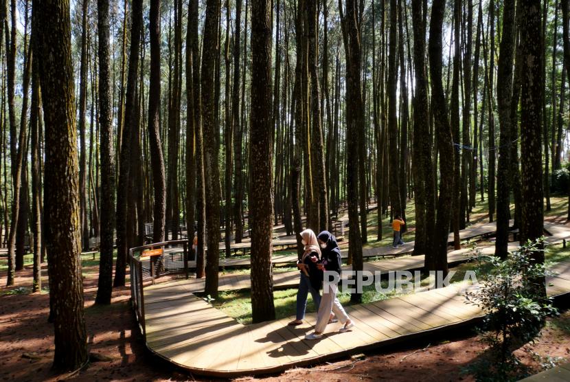 Warga berwisata di kawasan Hutan Pinussari Mangunan, Bantul, Yogyakarta.