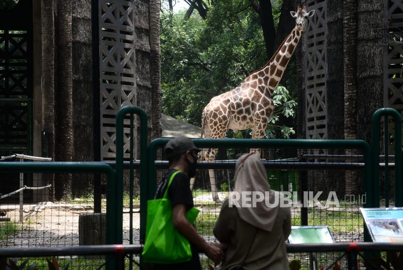 Taman Margasatwa Ragunan Buka Kembali Layanan Republika Online