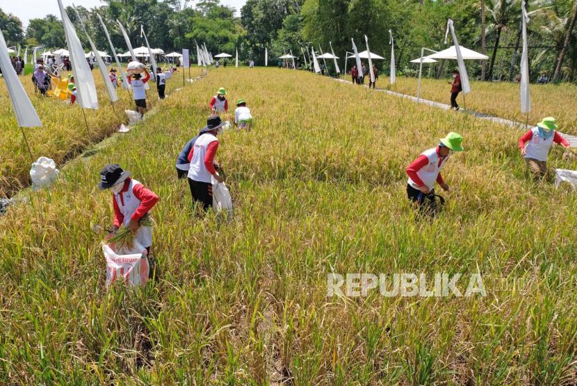 Sektor Pertanian di Magelang Jadi Andalan Gerakkan Ekonomi (ilustrasi).